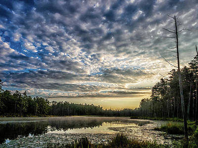 Photograph - Sunrise in the Pine Lands by Louis Dallara