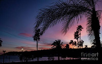Photograph - Sunset Colors by Debbie D Anthony