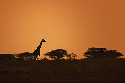 Animals Photos - Sunset Over Tarangire by Adam Romanowicz