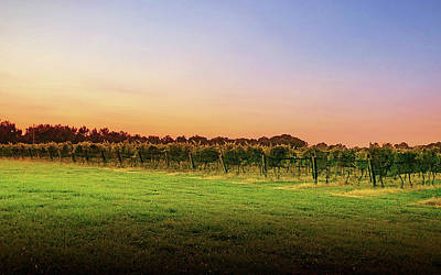 Lori A Cash Royalty-Free and Rights-Managed Images - Sunset Over Vineyard by Lori A Cash