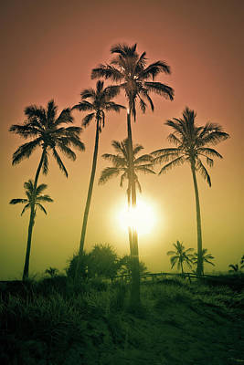 Royalty-Free and Rights-Managed Images - Sunset Palms by Az Jackson