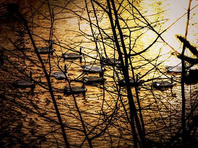 Animals Paintings - Sunset  Swim  by Robert Nacke