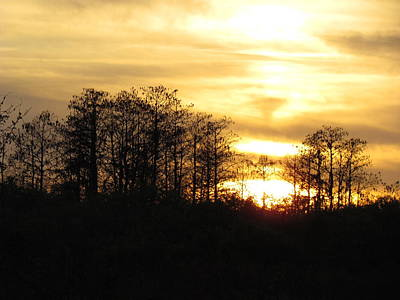 Photograph - Sunset Through Cypress Trees Okaloacoochee Slough State Forest Florida. Wall Art by Ian Sands by Ian Sands