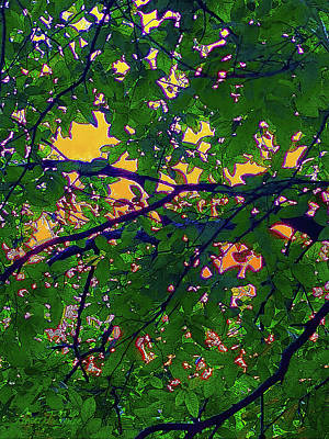 Mixed Media - Sunset Through The Leaves by Robert J Sadler
