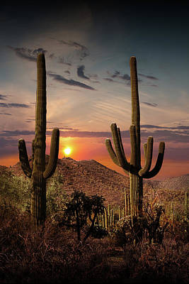 Anne Geddes - Sunset with Saguaro Cactuses in Saguaro National Park by Randall Nyhof