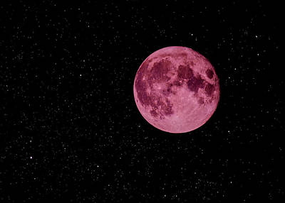 Classical Masterpiece Still Life Paintings - Super Pink Moon by Bob Orsillo