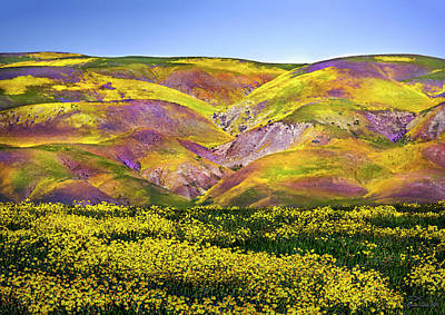 Palm Trees - Superbloom Hills Above Carizzo Plain, California by Brian Tada