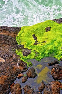 Jerry Sodorff Royalty-Free and Rights-Managed Images - Surf Lichen Tide Pool by Jerry Sodorff