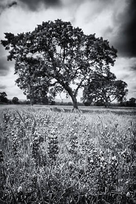 Surrealism Royalty-Free and Rights-Managed Images - Surreal Oak by Marnie Patchett