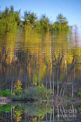 Surrealism Royalty-Free and Rights-Managed Images - Surreal rippling forest reflection in water by Fem Entangled