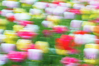 Surrealism Royalty-Free and Rights-Managed Images - Surreal Tulip Garden by Janice Noto