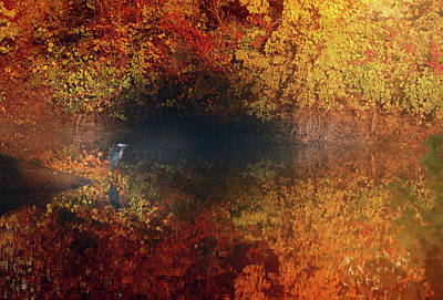 Photograph - Surrounded By Autumn by Rob Blair