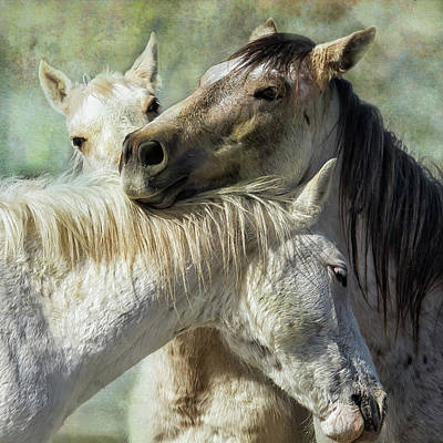 Animals Royalty-Free and Rights-Managed Images - Surrounded by Love by Belinda Greb