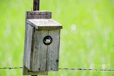 Royalty-Free and Rights-Managed Images - Swallow in a bird box by Jeff Swan