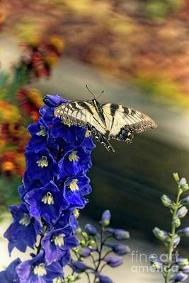 Animals Royalty-Free and Rights-Managed Images - Swallowtail on Delphinium by Mary Machare