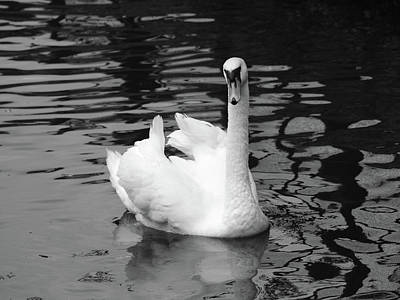 A White Christmas Cityscape - Swan in mono by Michaela Perryman
