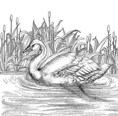 Animals Drawings - Swan by Jennifer Wheatley Wolf