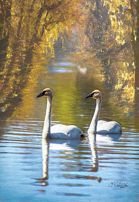 Photograph - Swan Reflections by Allyson Schwartz