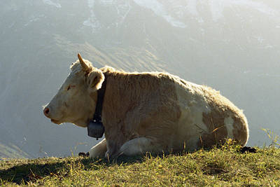 Photograph - Switzerland 9 by Marcio Faustino