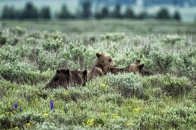 Amy Weiss - Talk to the Hand, Grizzly Bear Cub Style by Belinda Greb