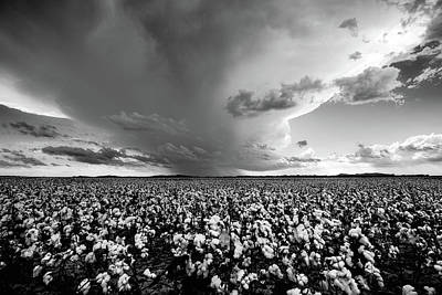 Kids Cartoons - Tall Cotton - Storm Over Cotton Field in Oklahoma in Black and White by Southern Plains Photography