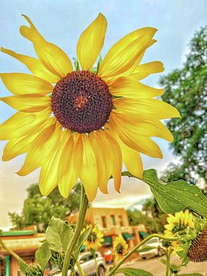 Sara Habecker Folk Print - Taos Sunflower  by Debra Martz