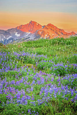 Royalty-Free and Rights-Managed Images - Tatoosh lupine Sunset by Johnny Adolphson