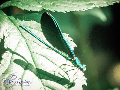 Travel - Teal Dragonfly by Kelly Larson