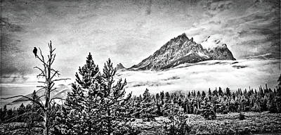 Polaroid Camera - Teton Morning Crow by Alycia Bromar