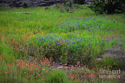 Personalized Name License Plates - Texas Hill Country Wildflowers by Dennis Nelson