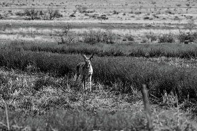 Sean - Texas Pronghorn 001123 by Renny Spencer