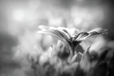 Venice Beach Bungalow - Textured Lavender Osteospermum Black and White  by Carol Japp