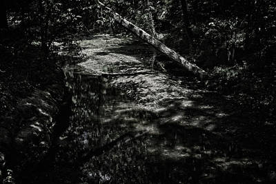 Soap Suds - Textures in the Woods by George Taylor