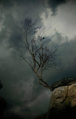 Hollywood Style - That Tree At Brimham Rocks by Clive Beake