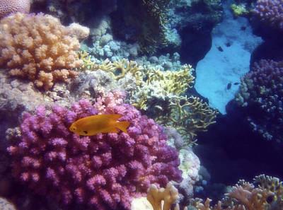 Polaroid Camera - The Beautiful And Mysterious Red Sea World  by Johanna Hurmerinta
