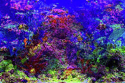Mixed Media Royalty Free Images - The Beauty of a Coral Reef Royalty-Free Image by Jason Mix