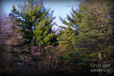 Frank J Casella Royalty-Free and Rights-Managed Images - The Beauty of Nature in the Forest by Frank J Casella