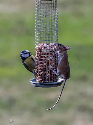 Photograph - The Bird and Mice Feeder by Torbjorn Swenelius