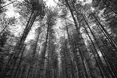 Whats Your Sign - The Dark Dark Woods by Martin Newman