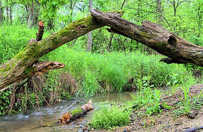 Photograph - The Duel by Bonfire Photography