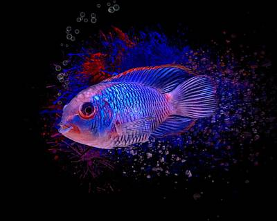 Basketball Patents - The Electric Blue Acara Cichlid by Scott Wallace Digital Designs