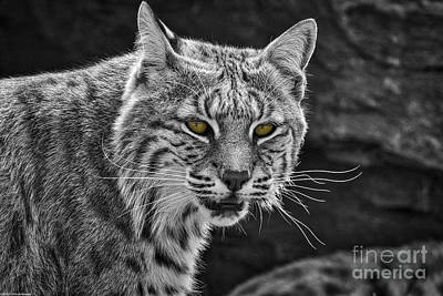 Animal Portraits - The Eyes Have It by Mitch Shindelbower