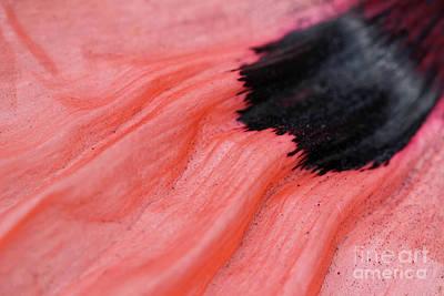 Photograph - The Flow of Poppy Art by Karen Adams