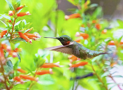 Truck Art Rights Managed Images - The Garden Hummingbird Royalty-Free Image by William Jobes