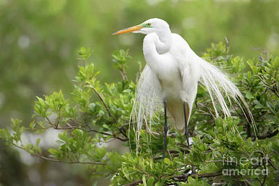 Outerspace Patenets - The Great White Egret by Linda D Lester