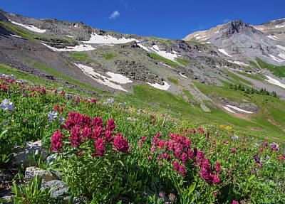 Royalty-Free and Rights-Managed Images - The Indian Paintbrush of Imogene Pass by Bridget Calip