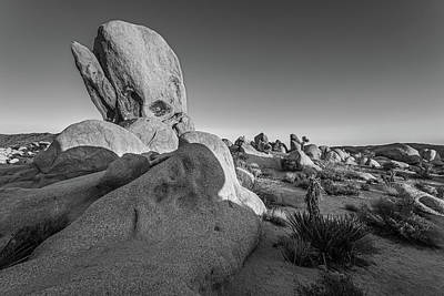 Kitchen Mark Rogan - The Joshua Tree Whale - Black and White  by Peter Tellone