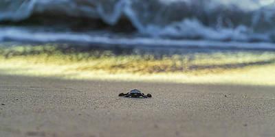 Photograph - The Journey Begins by Dave Matchett