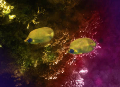 Stellar Interstellar - The Lovely Masked Butterflyfish In The Red Sea by Johanna Hurmerinta