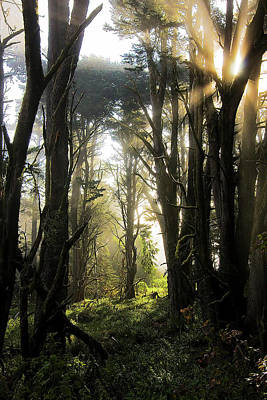 Photograph - The Magical Forest by Emmanuel Rondeau